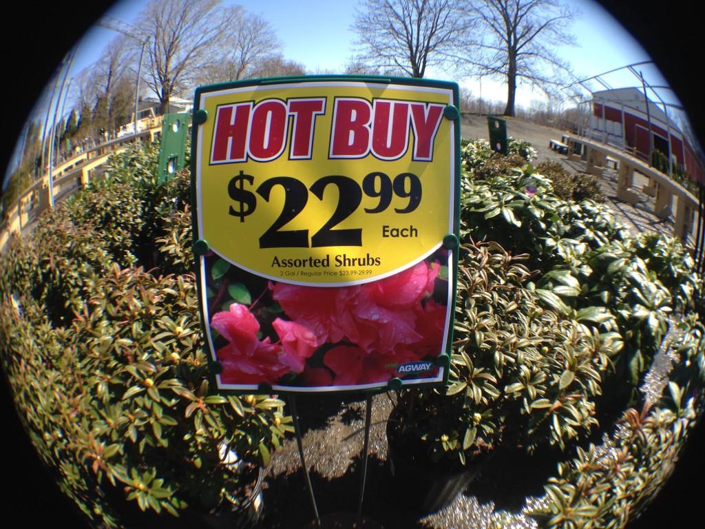 plant shopping 1