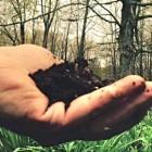 soil in hand 2