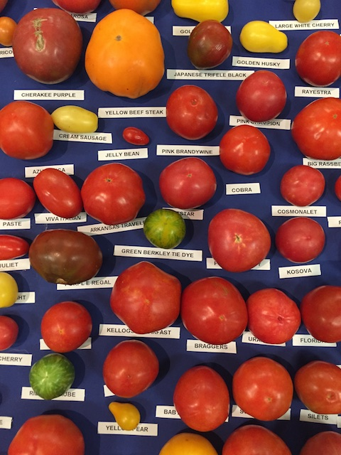 Heirloom tomato display at the Kentucky State Fair.