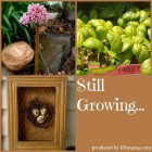 still-growing-album-cover1