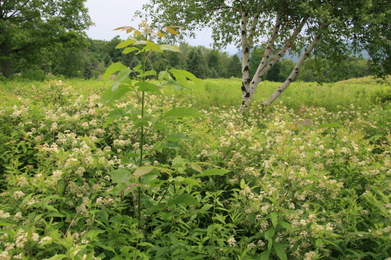 Don't pull such weedy intruders -- snip them at the base