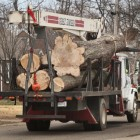 Tree removal near Louisville's Bowman Field airport.