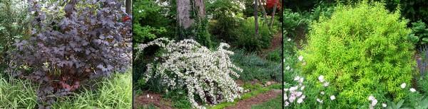 Great-performing shrubs in my garden.