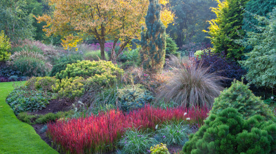 Adrain Bloom's Foggy Bottom garden (photo by Richard Bloom)