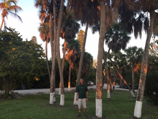 Painted palms on Sanibel Island
