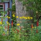 Cardinalflower 2