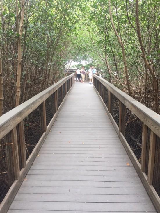 "Mangrove Overlook at the J.N. ""Ding"" Darling Wildlife Refuge."