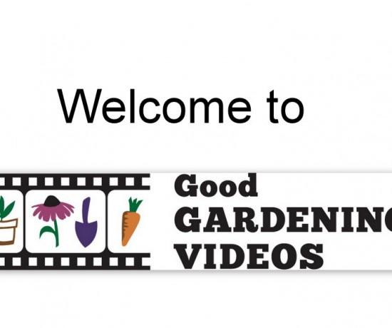 Video Graphics SAVE8-006