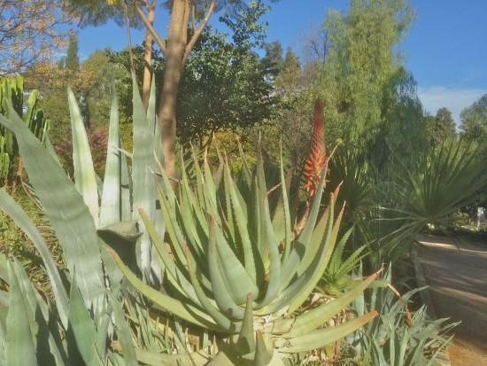 public garden Fez 2