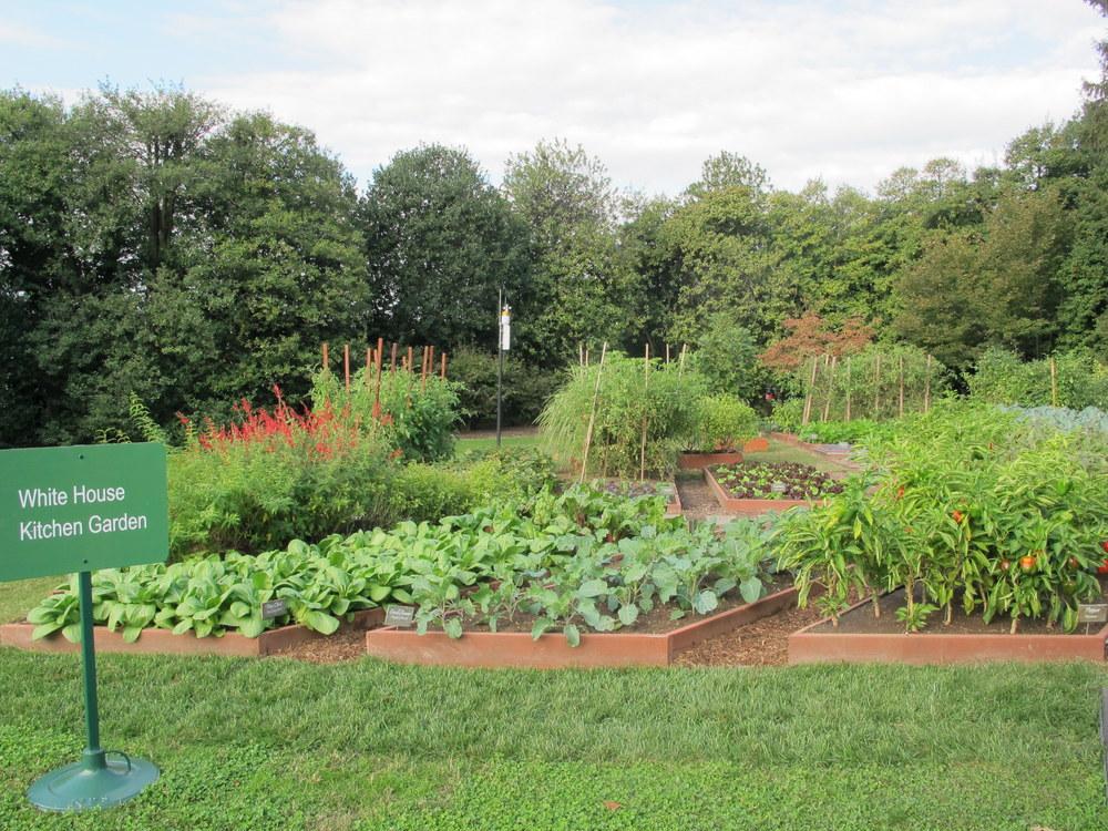 2012 photo of White House Kitchen garden by Susan Harris