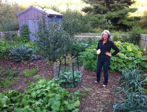 GardenRants by Michele Owens – My 10 Favorites