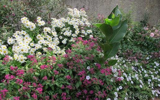 Annuals in Smithsonian Gardens