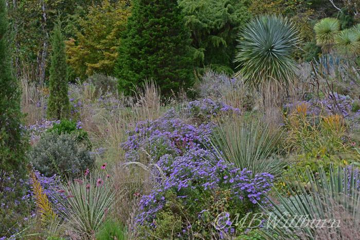 Chanticleer Garden's global influences in the gravel garden