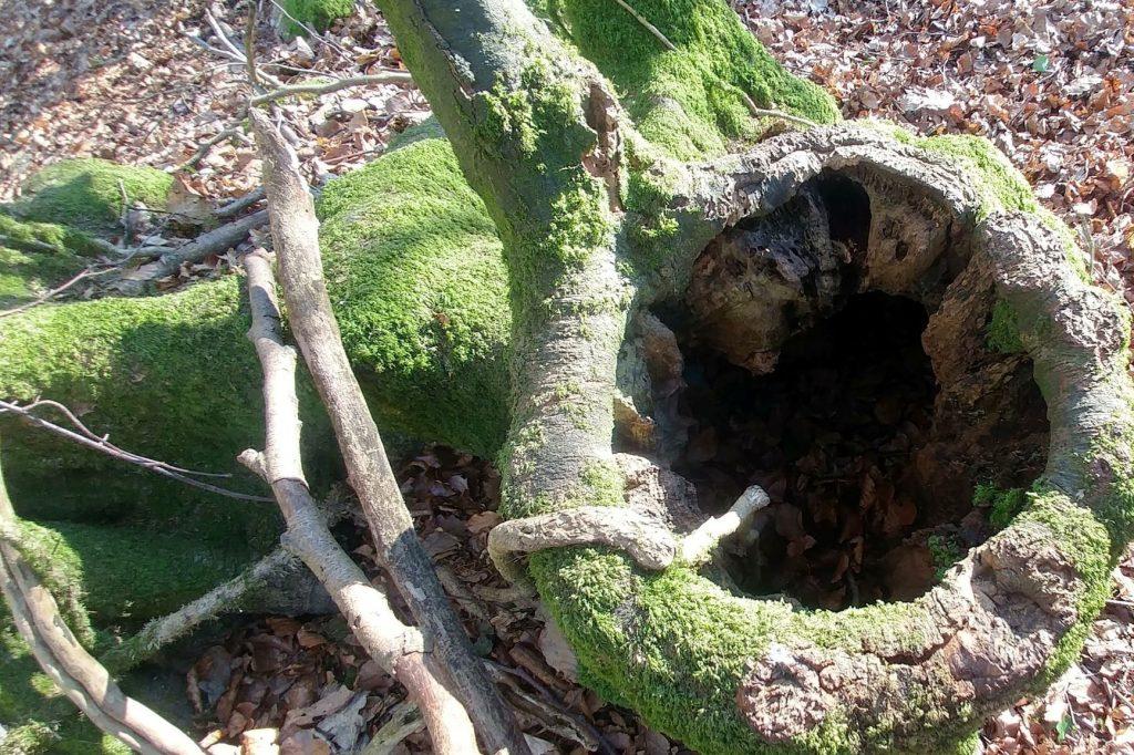 Tree stump, Veddw