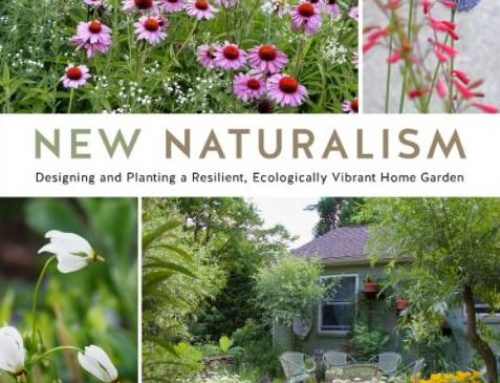 Kelly Norris on New Naturalism and Informed Plant Choices