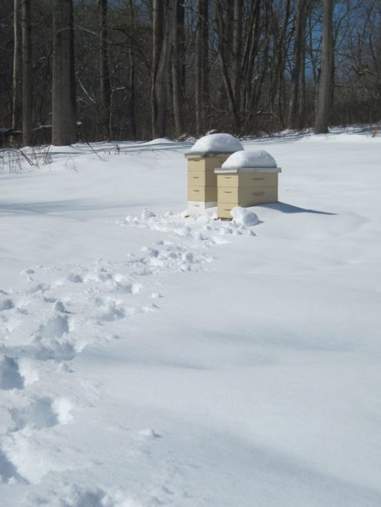 beehives in snow