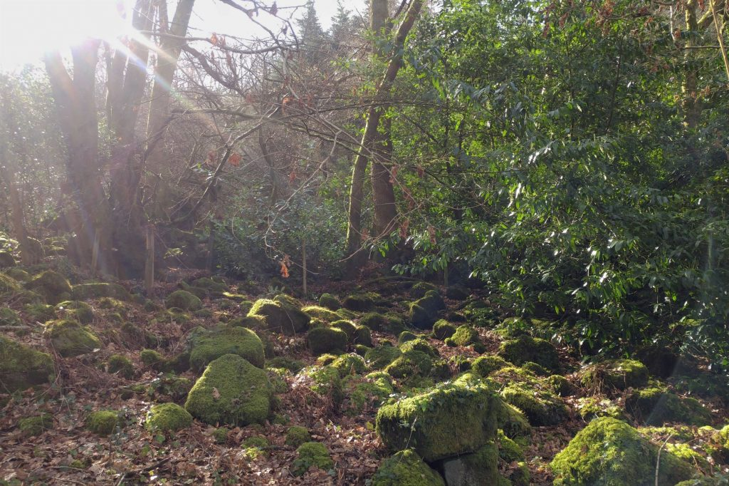 Boulders-in-the-Coppice-Veddw