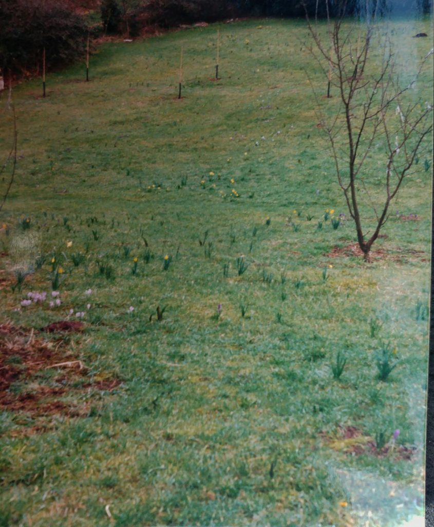Meadow at Veddw 1989 copyright Anne Wareham