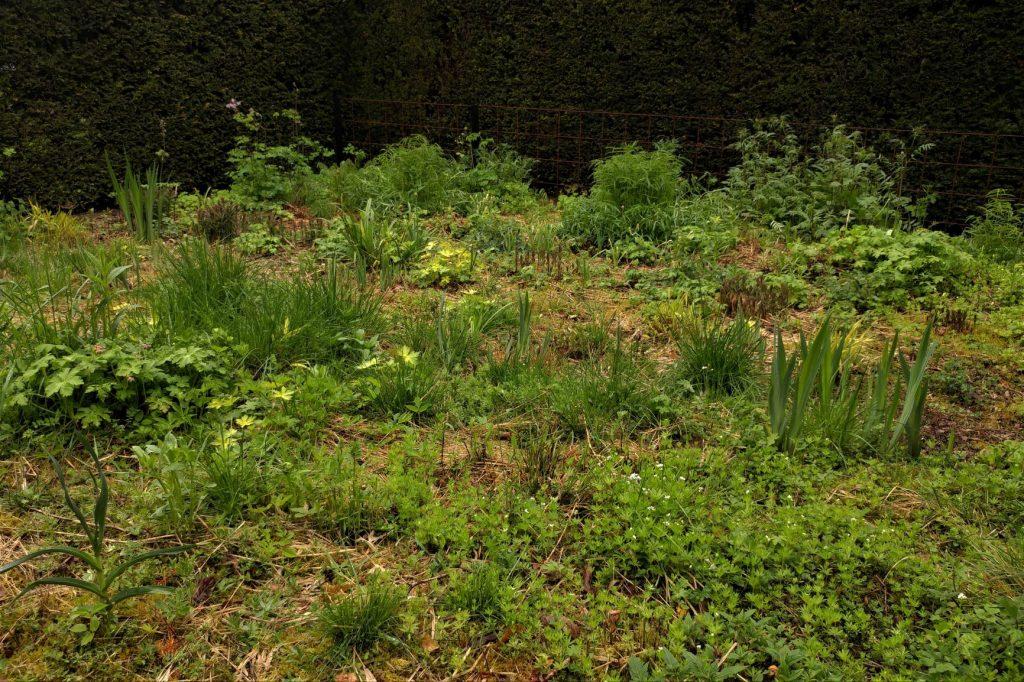 New garden at Veddw
