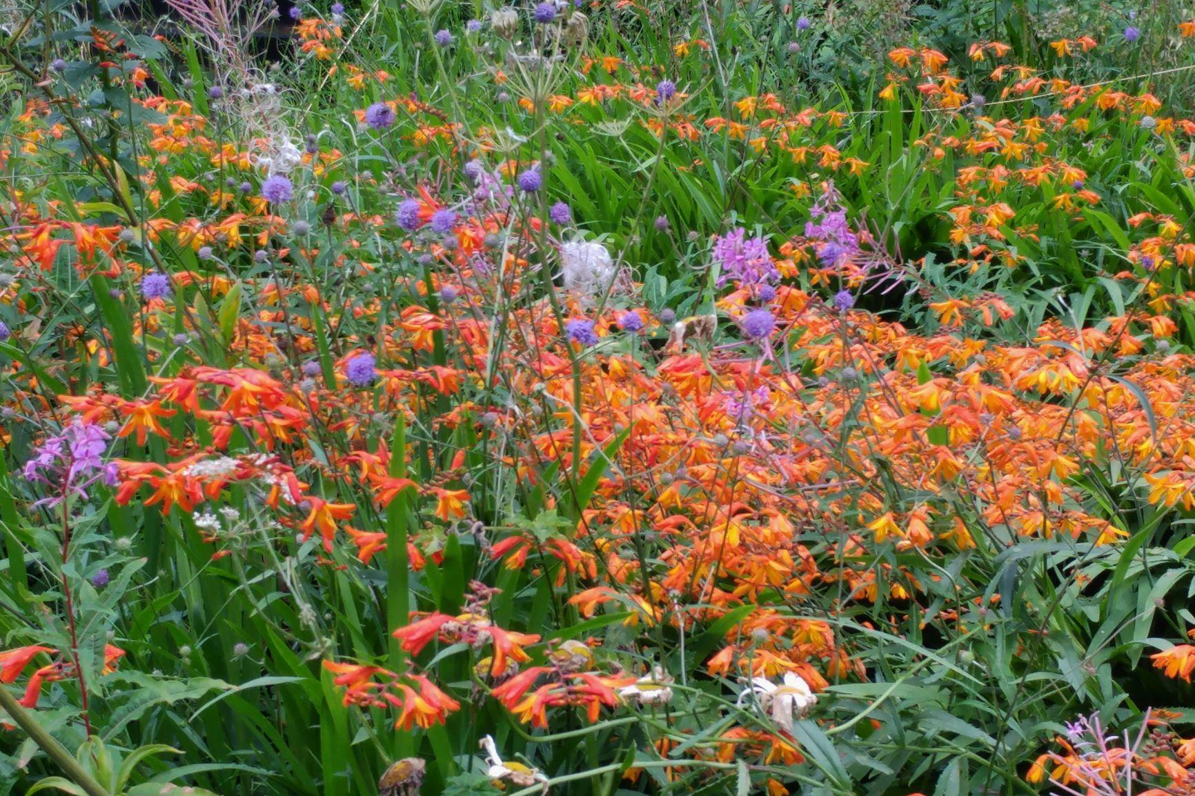 Wild Garden, Veddw