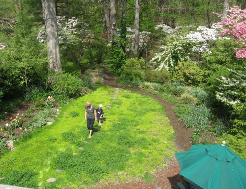 My 15 Years of Ranting about Lawn Replacement and Lawn Care