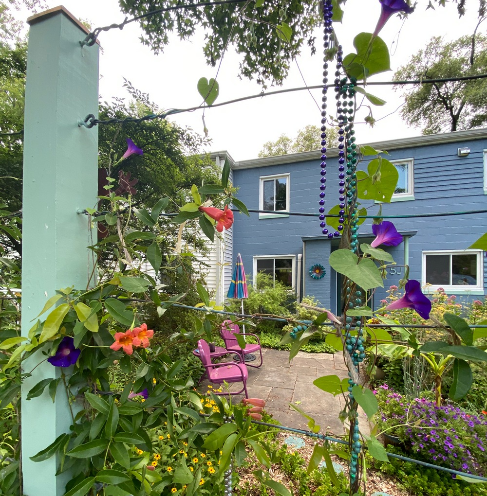 Morning glories and Crossvine blooming with blue house in Historic Greenbelt.