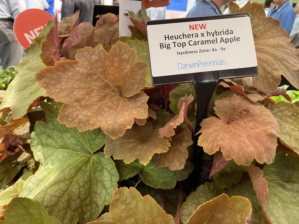 big top caramel apple at cultivate