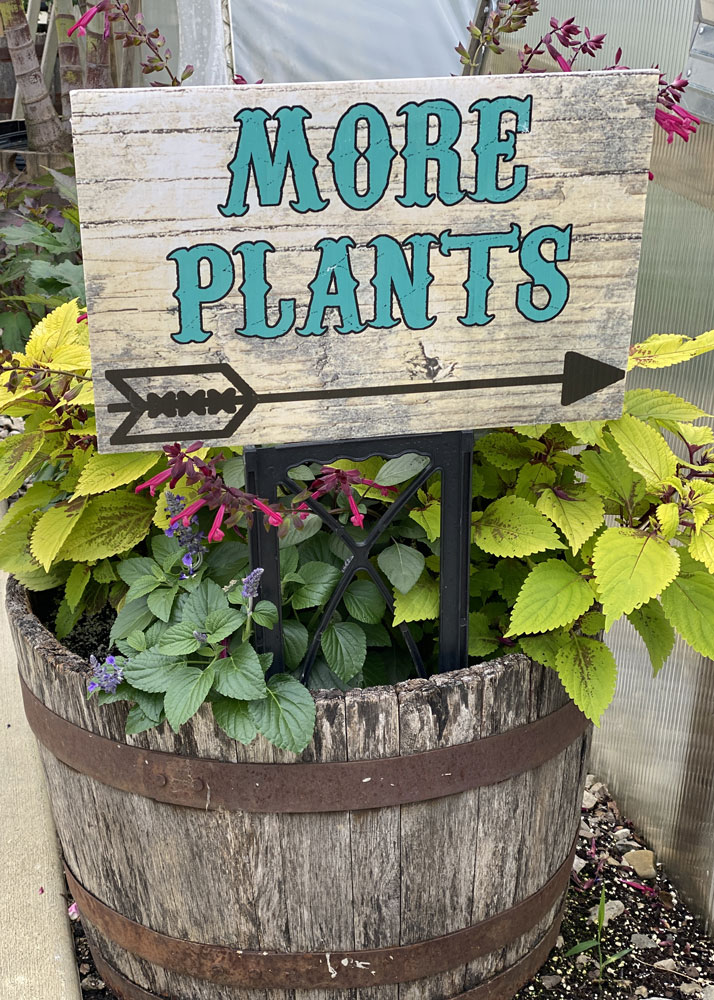 Groovy Plant Ranch