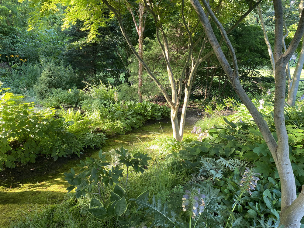 Garden of Scott Beuerlein
