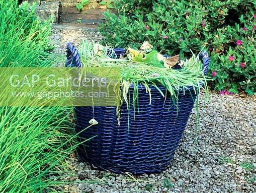 Blue painted wicker weeding basket - Veddw House Garden copyright Charles Hawes