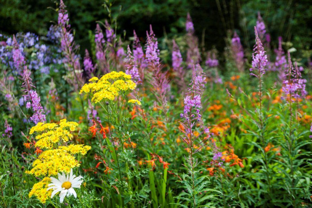 Wild Garden Veddw House Garden August Copyright Charles Hawes