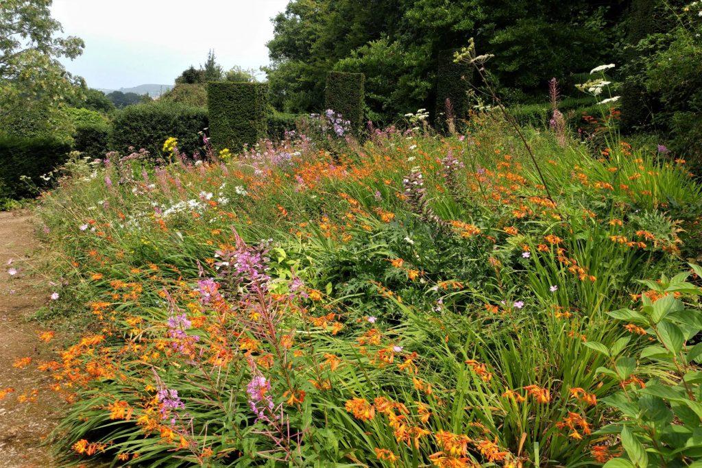 The Wild Garden, Veddw.