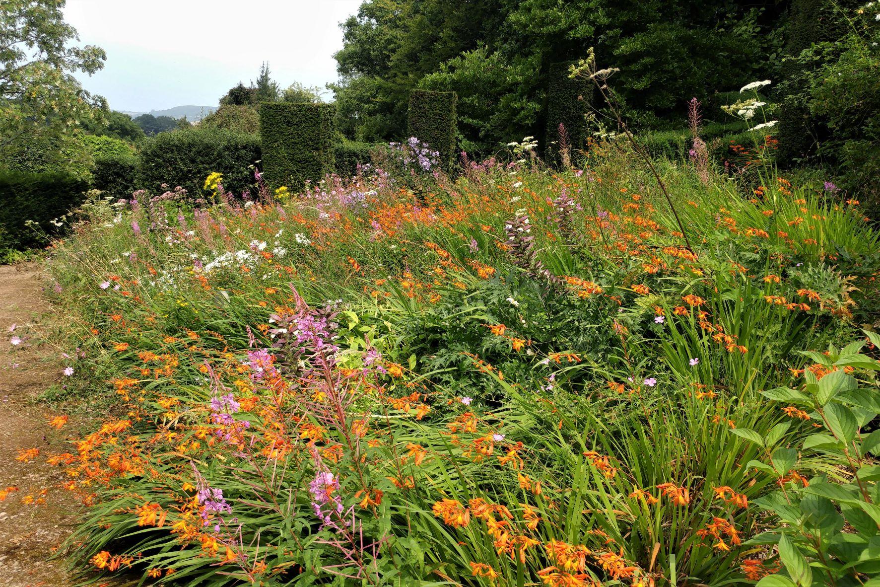Wild Garden, Veddw.