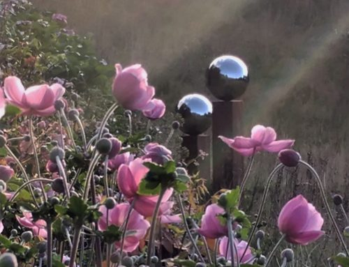 Japanese anemones taking a starring role.