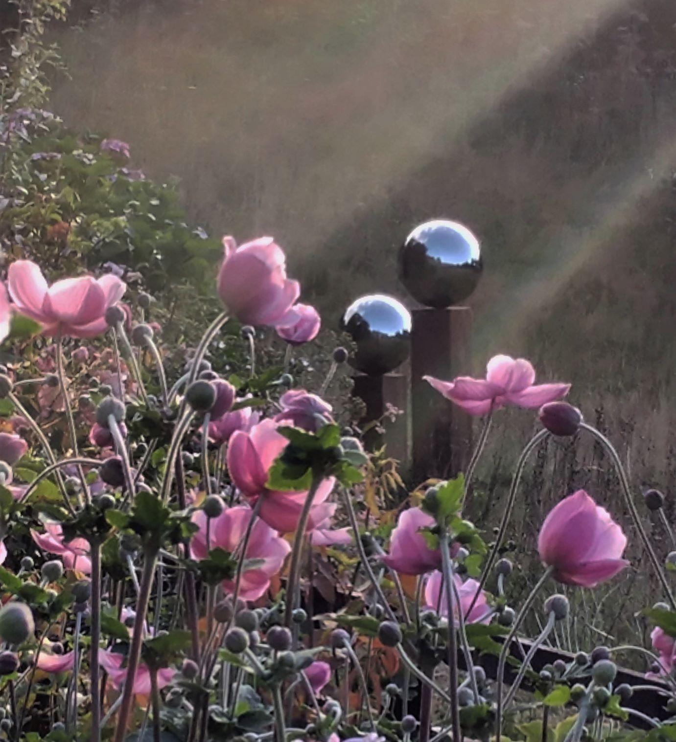 Japanese anemone at Veddw copyright Anne Wareham
