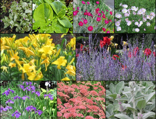 If my Gardens were All-Native, they'd be Missing these Favorites
